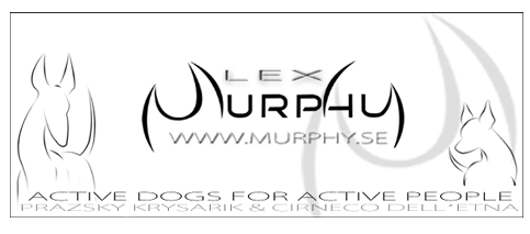 Welcome to Lex Murphy