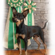 SPKK's Breed Specialty 2012