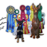 Högbo Triple INT dogshow 2012 – AMAZING results!!