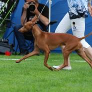 Svenstavik INT and Sighthound Specialty 13-08-03