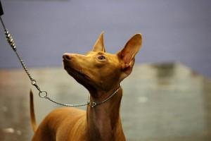 loke mydog