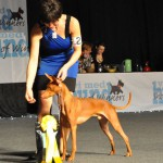 Loki 3rd place in Winners Cup at Show of Winner s2014