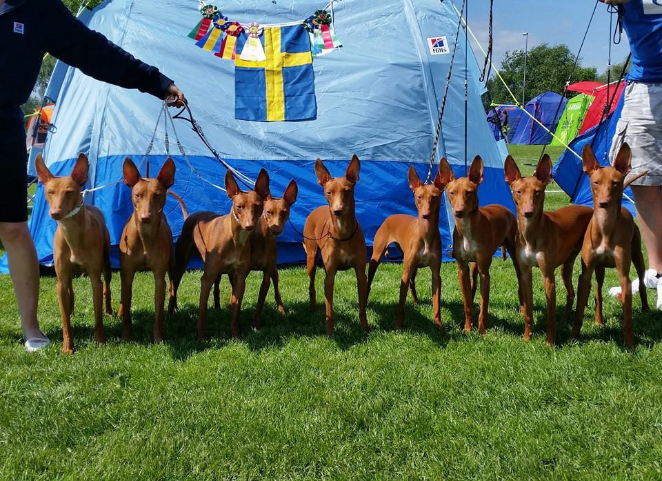 Eurosighthound 2014, 3xNAT shows
