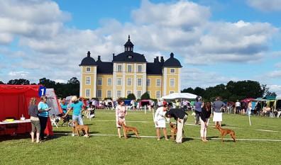 SVVK Sighthound Summer Show