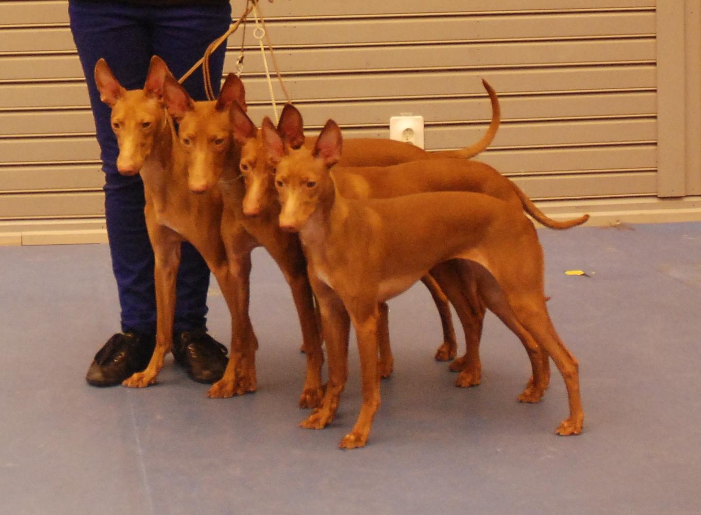 Puppyshow at Qpolen