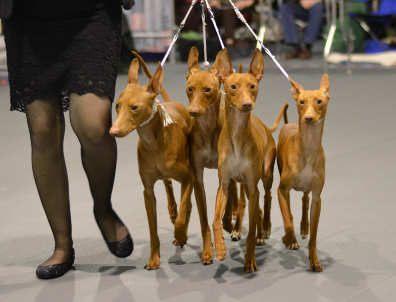 Sighthound Specialty Feb 21st